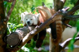 Lazy animal - how we feel when fighting self talk and moving through resistance