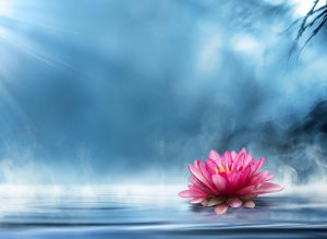 co-parenting symoblism: a lotus flower growing against the odds