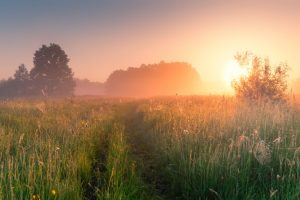 Co-parenting: a hazy sun rises over the fields